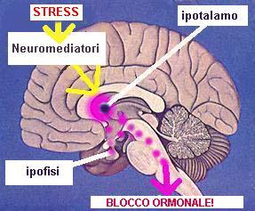 Stress e Sessualità Maschile
